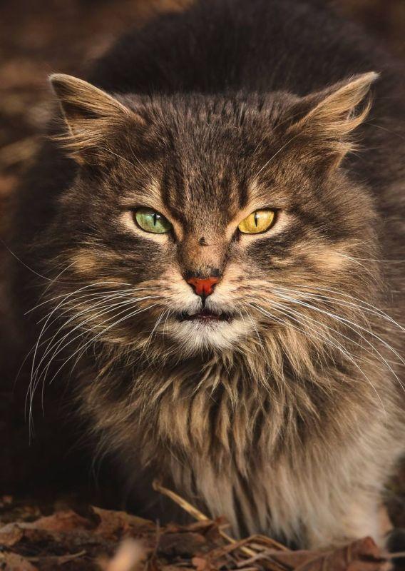 gatos rua fotografia gabriel khiterer (1)