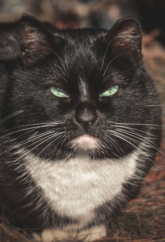 gatos rua fotografia gabriel khiterer (9)