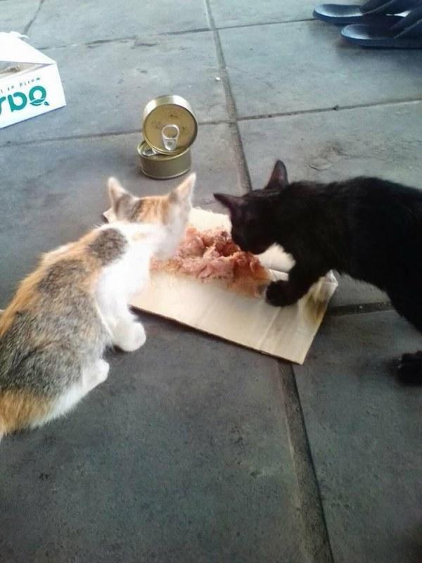 homem vende limoes gatos abandonados morador de rua tailandia gatinhos