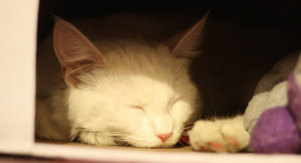 lar temporario gatos cuidados basicos dicas