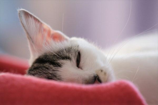 floral para humanos gatos tratamento duplo em conjunto