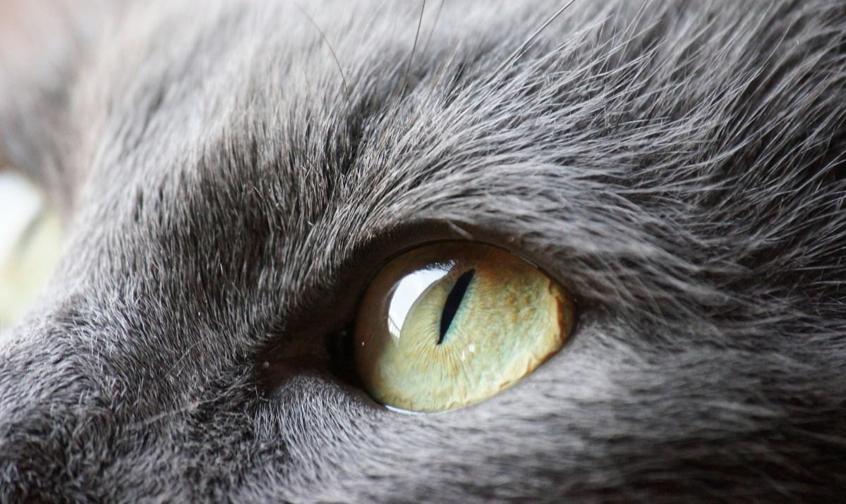 O que é a terceira pálpebra dos gatos?