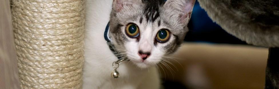 Ajude seu gato a perder o medo de visitas