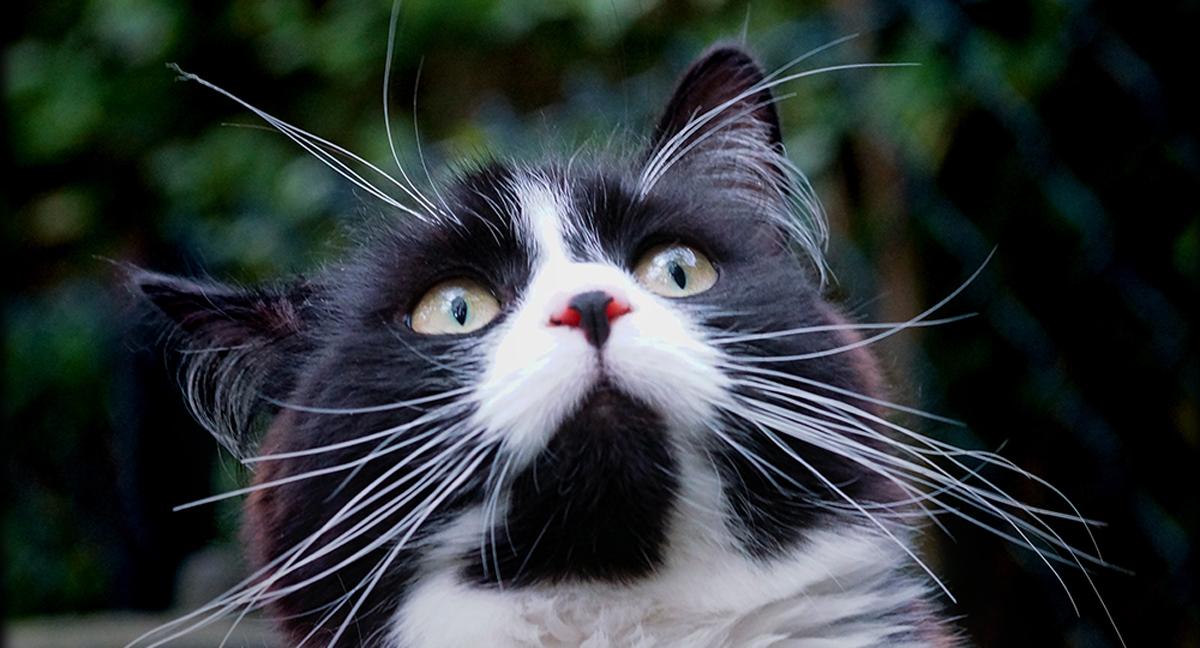Por que os gatos mordem nosso cabelo?