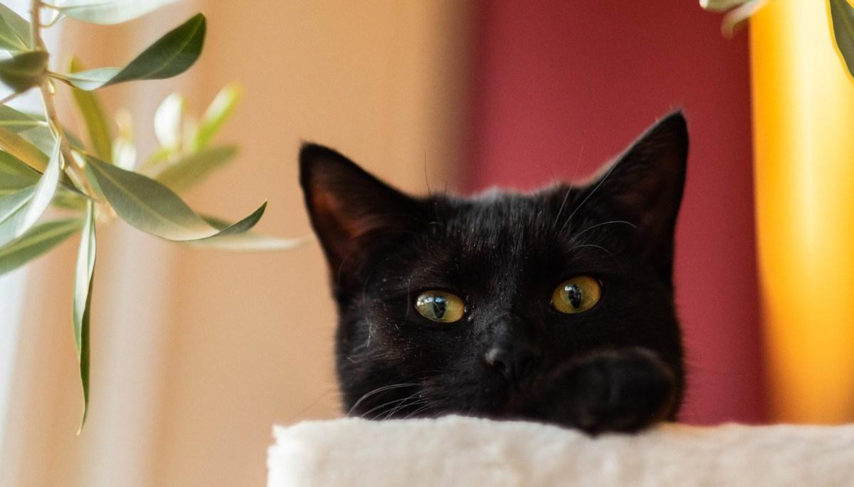 O segredo da felicidade para os gatos