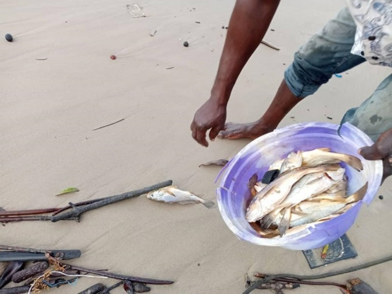 Health, Economic Woes Of Floating Dead Croakers Along Delta Coastline, A Challenge To Niger Delta Governors