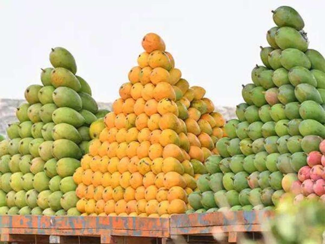 MANGO: THE HIGHLY BENEFICIAL FRUIT