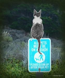 GA_Pets on leash