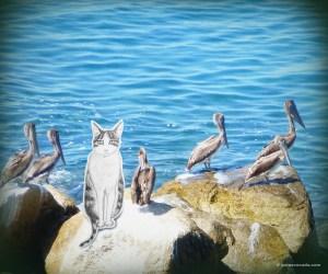 GA_con los pelicanos