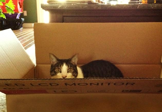 New TV? Must pass the cat's inspection. Photo: Glorimar Anibarro