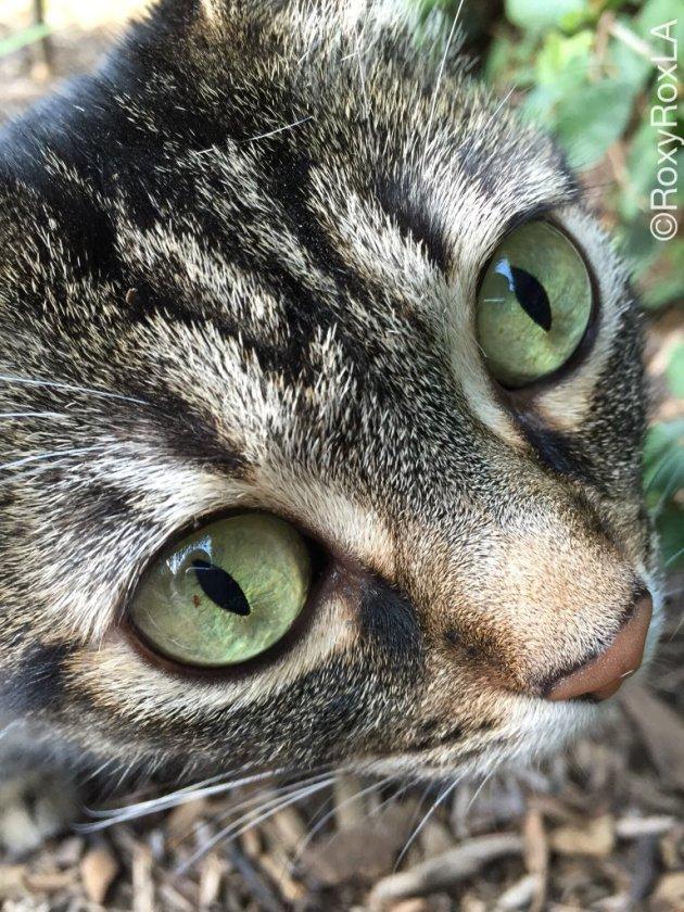 ¡Ojos protegidos! Pic: RoxyRoxLA