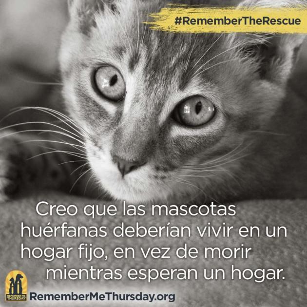 rmt16_public_fb_spanish_creo-que-las-mascotas-1