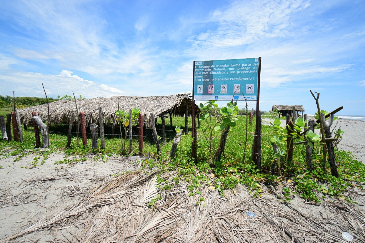 Expertos recomiendan conservar los recursos naturales de la isla, entre otras razones, por ser un sitio de importancia para la anidación de cuatro especies de tortugas marinas que están en peligro de extinción. Sin embargo, el proyecto turístico amenaza con poner en peligro a estas especies. Foto/Emerson Flores.