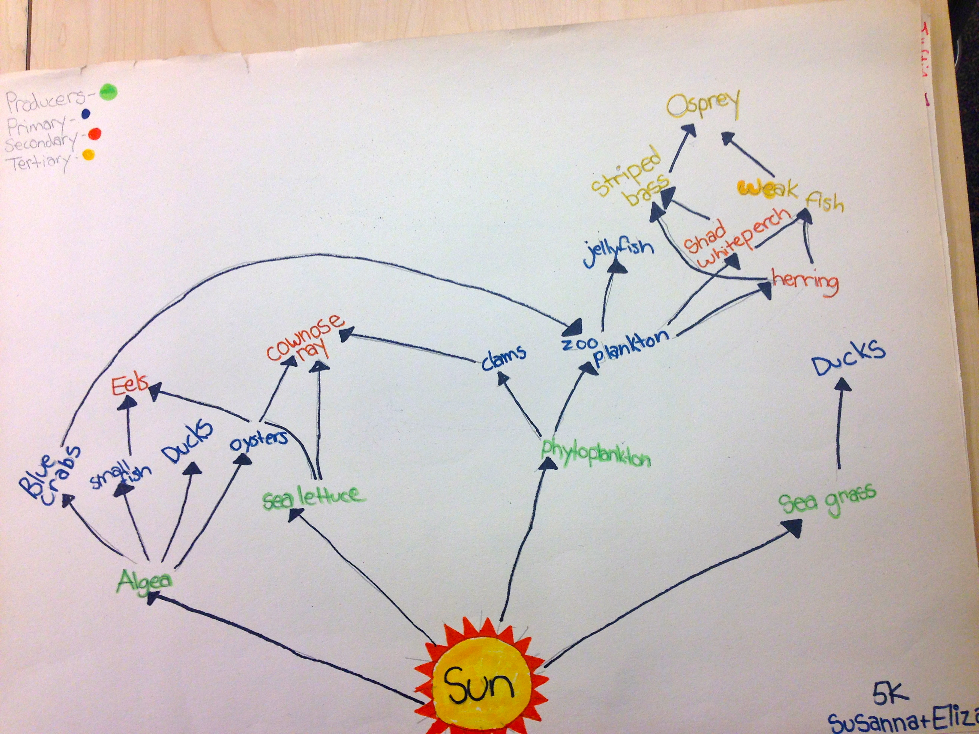 alligator food chain diagram chrysler 300 wiring swamp web pictures