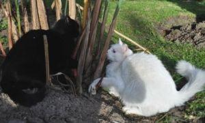 gatosyterritorio