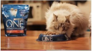 alimentacion del gato