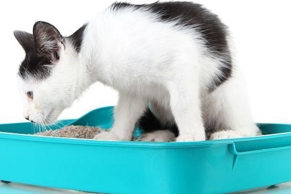 arena ecologica para gatos