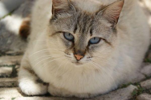 cat-114815_640