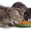 Necesidades Nutricionales en la Comida para Gatos