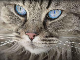 Consejos para Hacer Fotos de Gatos