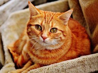 Tu Vida Cambia al Tener un Gato: ¿Por Qué?