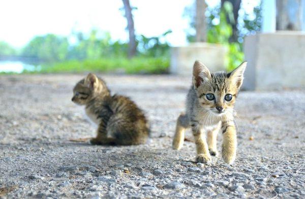 Cómo Hacer Fotografías a tu Gato en Verano