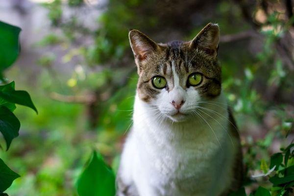 Cómo evitar denuncias vecinales por gatos molestos