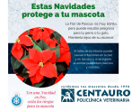 flor-de-pascua-navidad