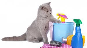Tu gato vomita.Ojo...toxicidad máxima!!
