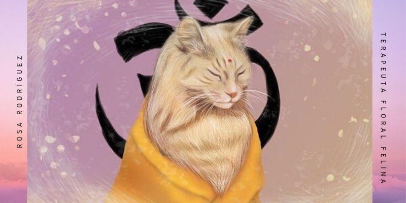 Meditar con gatos