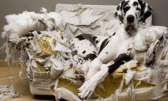 Descontrol perros