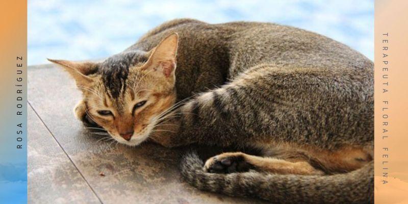 gato en suelo