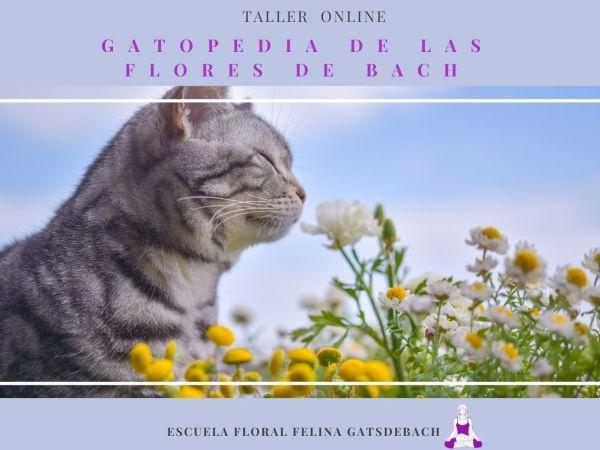 Taller Flores de Bach gatos