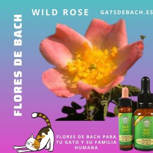 Wild Rose Crystal