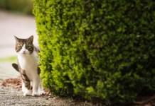 Cosa fare se il gatto si è perso