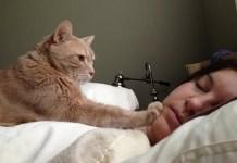 Cosa fare se il gatto ci sveglia di notte