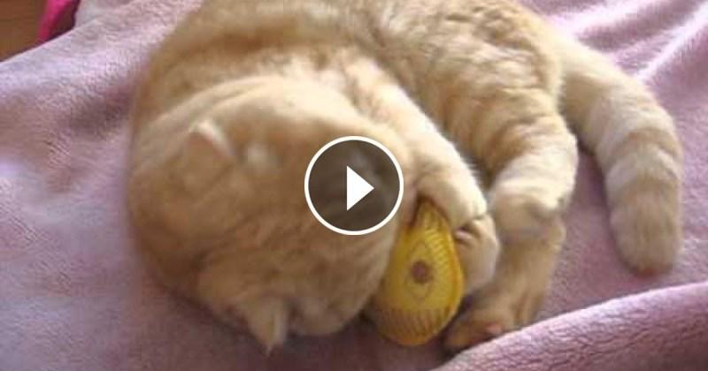 Gatti Pazzi Un Gatto Rosso Tarantolato Video