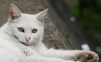 Gattissimi  Il fantastico mondo dei gatti