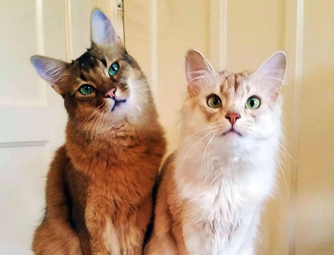 Nomi Per Gatti Ecco I Più Belli Gattissimi