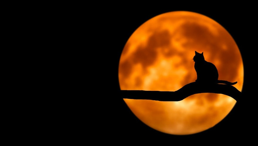 Nomi Per Gatti Come Chiamarlo I Più Belli Gatto Blog
