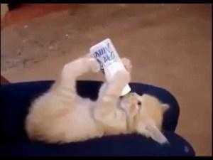 gato tomando leche en biberon 1