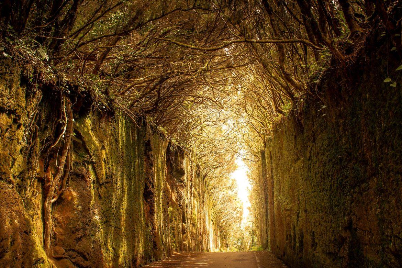 Gaurhari - Mindfulness - Tenerife