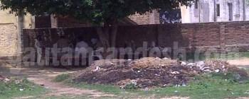 मंदिर के ठीक सामने घूर और पेड़ के नीचे आराम फरमाती पुलिस।