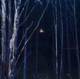 The light at the end of the forest