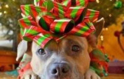 Gave til hund – 24 flotte tips som passer til både hund og eier