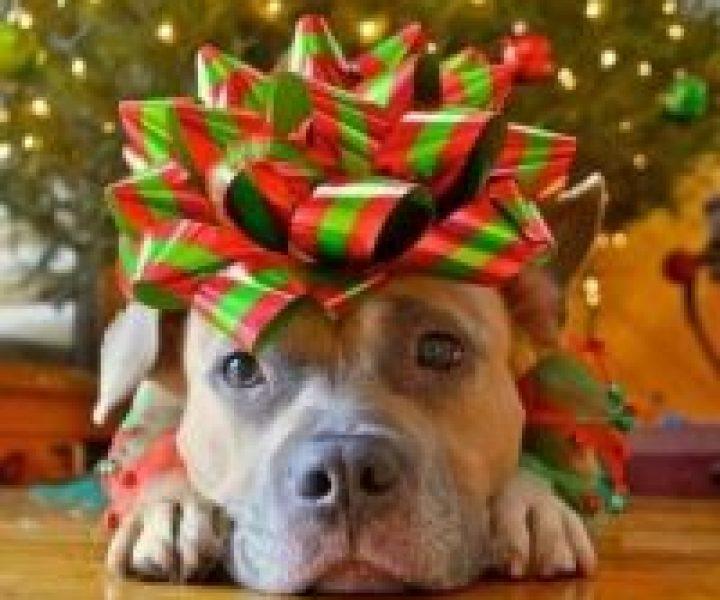 Gave til hund – Flotte tips som passer til både hund og eier
