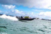 RIB-safari med Bergen Searib - Opplevelsesgave Image