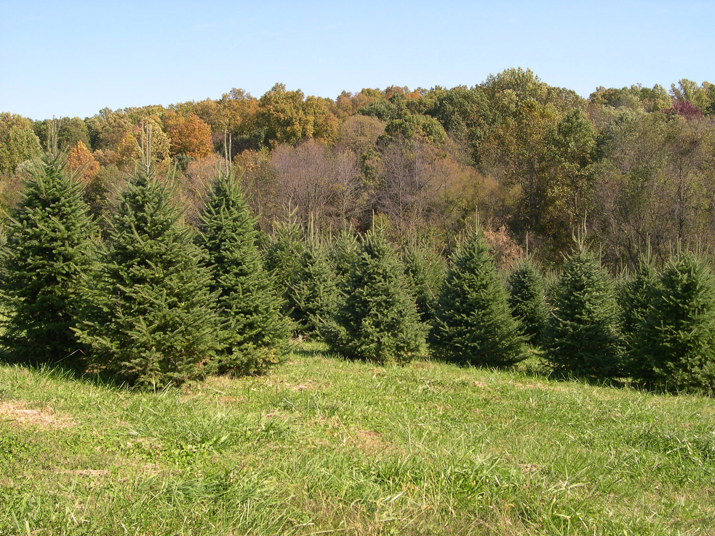 Christmas Trees. Pets Are Not Allowed On The Farm Premises Per Our  Insurance Carrier. We Follow The Federal Good Agricultural Practices (GAP)  For Food Crops ...