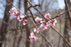 March 1 Spring in Sedona