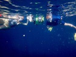 April 19 Snorkeling at Los Islotes, photo by Brodie